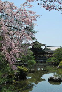 Sakura in Kyoto, Japan