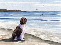 SPRINGER SPANIEL At The Beach Dog Watercolor Signed Fine Art Print by Artist D J Rogers. $12.50, via Etsy.