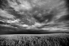 Kansas thunderstorm over wheatfield.