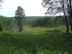 Panoramio - Photo of Canaan Valley National Wildlife Refuge