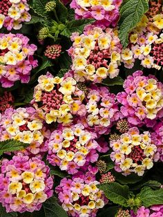 What's new and unique in flowers this year? We have a list of great annuals to plant in your garden. These plants are easy to take care of and look great in a pot or in a full garden in your beautiful yard! Look for more great flower option to start planning your garden.