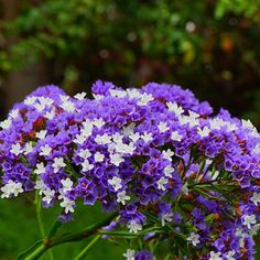 151 Types of Flowers Common in the U.S. | Care Guide