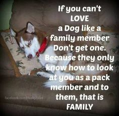 If you can't love a dog like a family member, don't get one. Would you agree?
