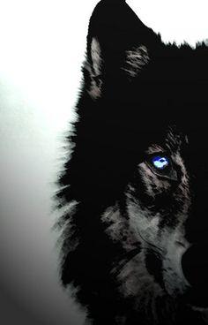 lobos negros de ojos rojos - Buscar con Google