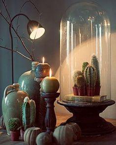 Interieurtrend: planten onder een stolp | Mrwoon