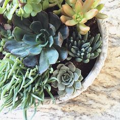 The more succulents I have, the more succulents I want.