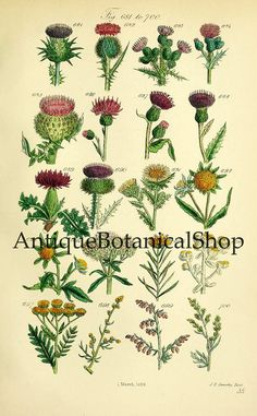 Antique botanical print set, Instant download illustrations, Set of 9 prints, Botanical art, Wild flowers print, Scanned book plates, JPG.  These beautiful illustrations are from British wild flowers, 1876.  You will receive 300 dpi resolution 9 scanned images at 6.5 x 10.5 inches.  Digital images will come without watermarks!  NOTE: This listing is for an INSTANT DOWNLOAD. No physical items will be shipped. Original images will be available immediately after check out. You will get a link…