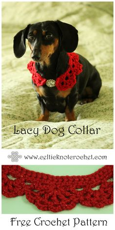 This is our Sadie girl – she is a miniature dachshund that will let us put any outfit on her.  She is very sweet and fun even though she does get into mischief on occasion!  I created this collar so she would have something festive to wear for our annual family Christmas picture.  It uses simple stitch combinations and works up quickly. (adsbygoogle = window.adsbygoogle || []).push({}); Yes, Sadie is tiny (only 10 pounds!) and I made[Read more]