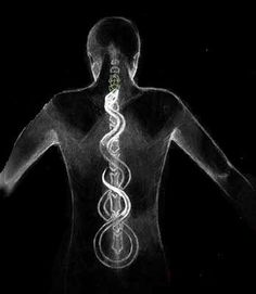 The Significance of Your Spine on a Spiritual Journey – Fractal Enlightenment