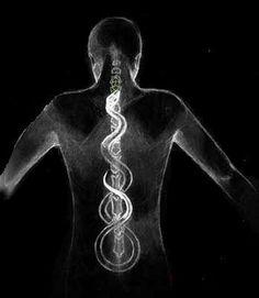 """A Importânciada Sua Coluna Vertebral em uma Jornada Espiritual  Por: Sonali Bansal """"Assim, a coluna vertebral é uma dimensão de você, que determina em qual direção você vai. Como sua coluna …"""