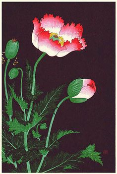 Indigo Dreams — Poppies by Ohara Koson, 1933 Nature Prints, Art Prints, Block Prints, Linocut Prints, Ohara Koson, Art Chinois, Illustration Art, Illustrations, Art Japonais