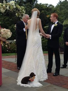 No words. This is the best photo we've seen all day #dogsandweddings