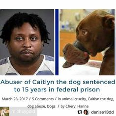 """So glad this bitch got 15yrs!!.. UK needs to follow suit for animal abuse cases!. This poor baby could not eat drink or bark! how on earth can some people be so cruel wicked & downright evil?. Someone was nice enough to tell me about a follow up Vid of Caitlyn on youtube. You can see her heartwarming happy ending even though she will forever bear the scars of her ordeal. If you would like to view the vid just type in """"Dog's best day - Caitlyn.""""  Repost @feliciaecheverria   Caitlyn got…"""