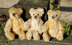 3 old miniature Steiff bears for sale at www.oldteddybearshop.co.uk