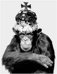Albert Watson (b. Scottish), Monkey Series - Casey King, New York City, in.W © Albert Watson & Preiss Fine Arts Photographers Limited Editions Sarah Moon, Paolo Roversi, Black And White City, Black And White Pictures, Peter Lindbergh, King Kong, Los Primates, Tv Movie, Christo And Jeanne Claude