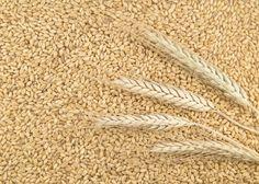 Sono positivi i primi dati sulla campagna cereali 2015 che emergono dall'analisi di Cesac (Centro Economico Servizi Agricoli), la cooperativa di Conselice (Ravenna) con una posizione di rilievo...