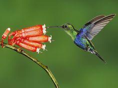 Support Hummingbird Garden Habitats