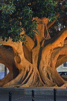 Ein mächtiger Baum, eingefasst mit Mauersteinen. Und Absperrung, vielleicht gegen parkende Autos.