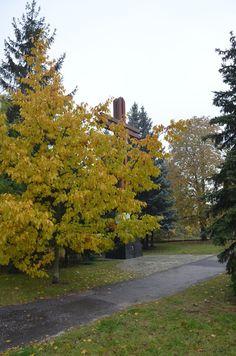 Kroniki Inowrocławskie: Deszczowo, mglisto.......ale nadal pięknie w Inowr...