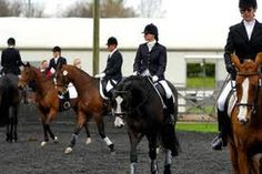 Show season is coming up, and that means navigating a busy warm up arena! Riding in an arena full of horses is a bit like driving on the interstate – it takes practice! You would never send a...