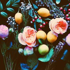 Flora and fruit. LOVE the colour balance of bright and dark! All Flowers, Flowers Nature, Beautiful Flowers, Bright Flowers, Floral Arrangements, Planting Flowers, Floral Design, Justina Blakeney, Instagram