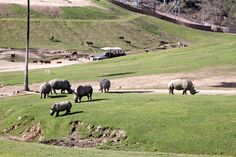 san diego zoo safari park - Google Search