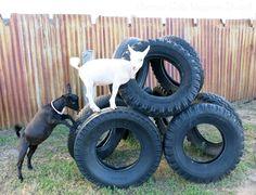 Tire climb.