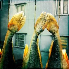 Fish hung out to dry in Tai O village | Palani Mohan