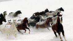 horse, herd, running - http://www.wallpapers4u.org/horse-herd-running/