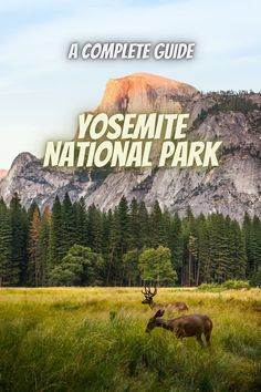Here is a guide to Yosemite National Park. yosemite national park wedding   Yosemite national park fall   Yosemite national park hikes   Yosemite national park camping   Yosemite national park things to do   camping in Yosemite #USAnationalparks #nationalparks #YosemiteNationalPark Best National Parks Usa, National Park Camping, California National Parks, Visit California, Yosemite National Park, Things To Do Camping, Yosemite Camping, Beautiful Waterfalls, State Parks