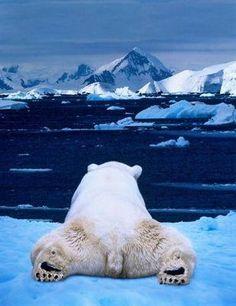 Polar bear searching