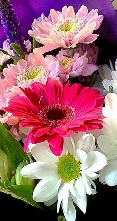 Bulb Flowers, Flowers Nature, Exotic Flowers, Pink Flowers, Very Beautiful Flowers, Amazing Flowers, My Flower, Flower Power, Sunflowers And Daisies