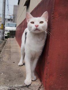 野良の子猫と母猫写真ある程度たまったので適当に貼っていく:ハムスター速報