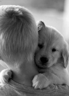 sweet hug from a golden retriever puppy