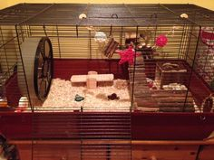 Chesney my #syrianhamster he's around 4-5 months old now x (he's new Alaska cage)