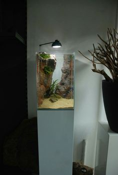 vertical aquascape eheim tank
