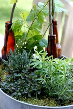 Plant a garden filled with plants used in the beer making process from HGTV.
