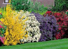 3 conseils pour un jardin à l'abri des regards | Carré de l'Habitat