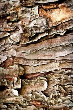 Tree Bark Abstract - nature can be so inspirational Texture Photography, Abstract Photography, Macro Photography, Natural Forms, Natural Texture, Patterns In Nature, Textures Patterns, Foto Macro, Abstract Nature
