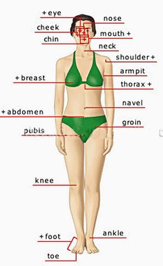 Human Body Parts Pictures with Names - Body Parts Vocabulary: Leg, Head, Face, Teaching English Grammar, English Vocabulary Words, Learn English Words, English Phrases, English Language Learning, English Writing, English Study, English Posters, Food Vocabulary