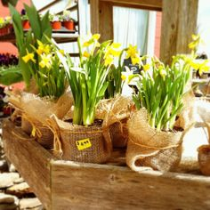 Mini Easter Flowers wrapped in burlap & twine. Perfect to bring to Easter Dinner.