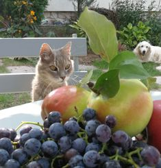 Garden Park, Parks, Gardens, Apple, Fruit, Lady, Apple Fruit, Outdoor Gardens, Apples