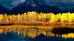 Painting inspiration- brilliant yellow trees against a blue mountain & lake