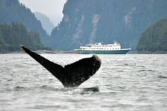 #Alaska #Whale Wilderness Explorer #boat #cruise