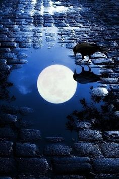 beautymothernature:  ~ Expression Moon Re share moments