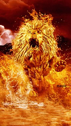 The perfect Lion Animated GIF for your conversation. Discover and Share the best GIFs on Tenor. Lion Images, Lion Pictures, Fire Lion, Fire Image, Flame Art, Lion Wallpaper, Lion Of Judah, Lion Art, Beautiful Gif