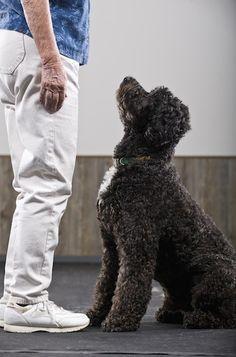 10 Dog Training Mistakes to Avoid - PawNation. 10 Dog Training Mistakes to Avoid - PawNation. dog training tips Dog Training School, Dog Training Tips, Potty Training, Dog Minding, Easiest Dogs To Train, Dog Barking, Dog Hacks, Old Dogs, Service Dogs