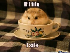 15 Funny Hamster Memes To get You Through Friday - World's largest collection of cat memes and other animals Super Cute Animals, Cute Little Animals, Cute Funny Animals, Funny Cute, Animal Jokes, Funny Animal Memes, Funny Animal Pictures, Cat Memes, Robo Hamster