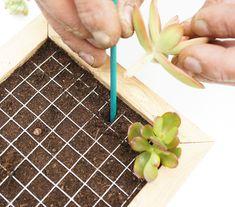 Les tableaux de succulentes Permaculture, Garden Plants, Plastic Cutting Board, Succulents, Flowers, Art Floral, Gardening, Design Jardin, Nature