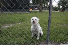 The Best Way to Get Cheap and Sturdy Fencing for Dog Daycare